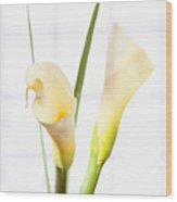 Calla Lily Wood Print by Mike McGlothlen