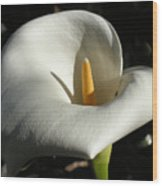 Calla Lily-santa Monica - 2005 Wood Print