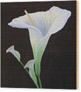 Calla Lily X Wood Print