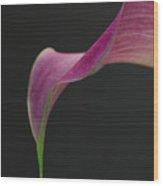 Calla Petal Wood Print