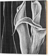 Callas Lilies Trio Wood Print