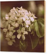 Callery Pear Blossoms Wood Print