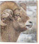 Calling All Ewes Wood Print