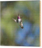 Calliope Hummingbird In Flight Wood Print