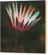 Calliope Wood Print