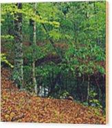 Calm Stream Through Beech And Magnolia Wood Print