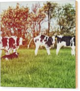 Calves In Spring Field Wood Print