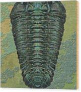 Calymene Niagarensis Wood Print
