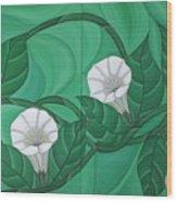 Calystgia Sepium  Wood Print