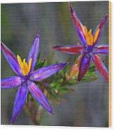 Calytrix 3a -starflower Wood Print
