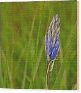 Camas Flower Pod Wood Print