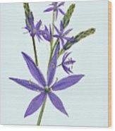 Camas, The Flowers Wood Print
