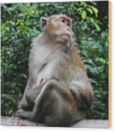 Cambodia Monkeys 2 Wood Print