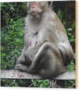 Cambodia Monkeys 3 Wood Print
