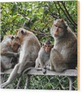 Cambodia Monkeys 5 Wood Print