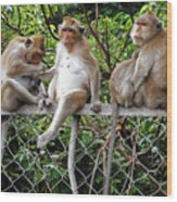 Cambodia Monkeys 7 Wood Print