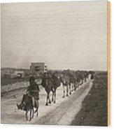 Camel Caravan, C1911 Wood Print