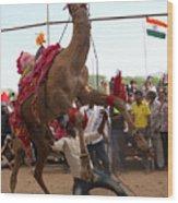 Camel Dance Pushkar Wood Print