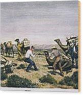 Camel Express, 1857 Wood Print