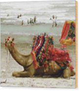 Camel For Ride  Wood Print
