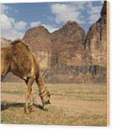 Camel Grazing In A Desert Landscape Wood Print by Sami Sarkis