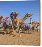 Camel Racing In Dubai Wood Print
