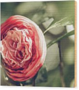 Camellia 3 Wood Print