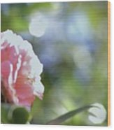 Camellia And Early Light Wood Print