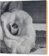 Camellia Back And White Wood Print