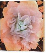 Camellia Bloom Wood Print