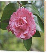 Camellia Hybrid Wood Print