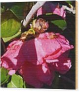 Camellia Light And Bud Wood Print