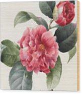 Camellia Wood Print