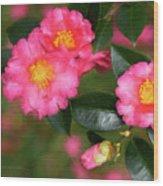 Camellia Pink Wood Print