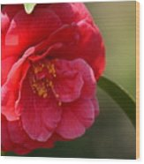 Camellia Rosette Wood Print