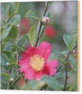 Camellia Sasanqua Yuletide Wood Print