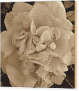 Camellia Sepia Wood Print