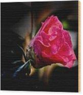 Camellia Silhouette  Wood Print