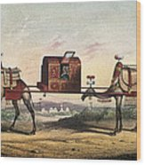 Camels And Litter Wood Print