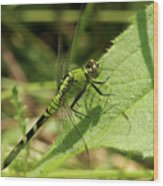 Cameo Green Dragonfly Wood Print