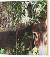 Camera Shy Donkey Wood Print