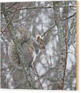Camera Shy Grey Squirrel Wood Print