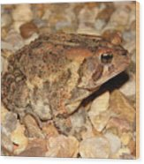 Camouflage Toad Wood Print