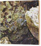 Camouflaged Crab Wood Print