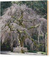 Camperdown Elm Tree Wood Print
