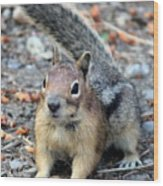 Campground Chipmunk Wood Print