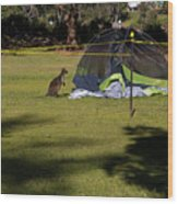 Camping With Swamp Wallaby Wood Print
