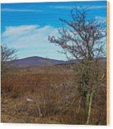Canaan Valley West Virginia Wood Print