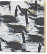 Canada Geese 1 Wood Print