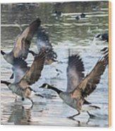 Canada Geese 1390-011618-1 Wood Print